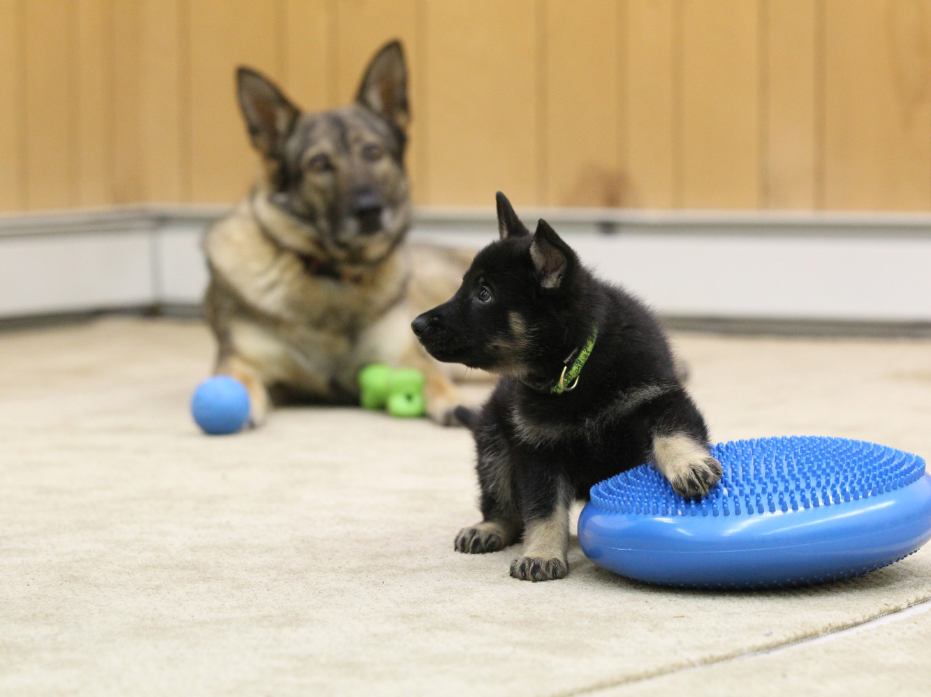 TRAINING FOR PUPPIES AND DOGS OF ALL AGES