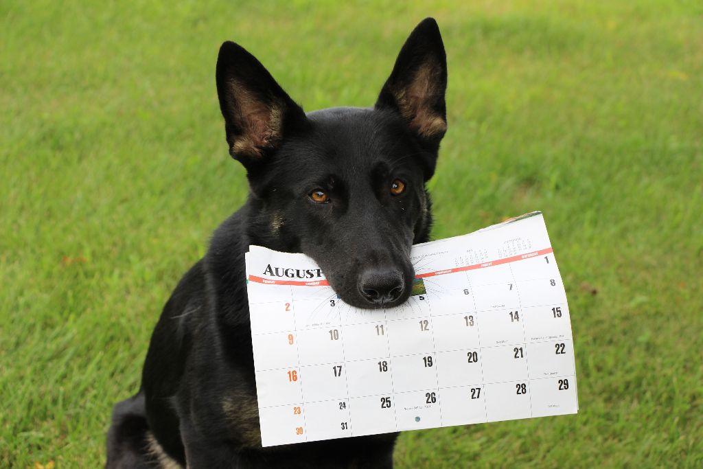 Schedule of Dog Training Classes, Activities, Events in Twin Cities Area Of Minnesota