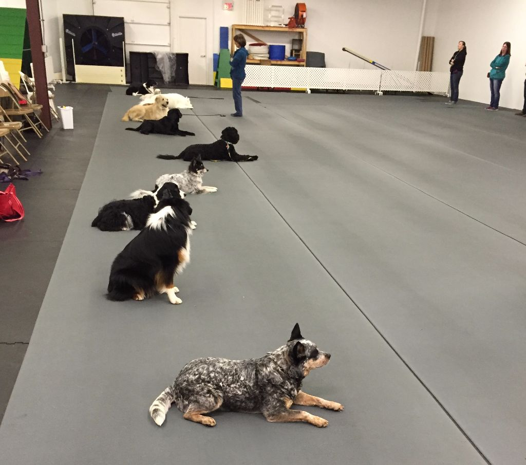 "Three ""Ds"" of Dog Training"